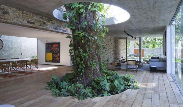 pohon dalam rumah